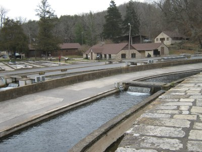 Winter fishing roaring river state park with tim holesley for Roaring river fish hatchery